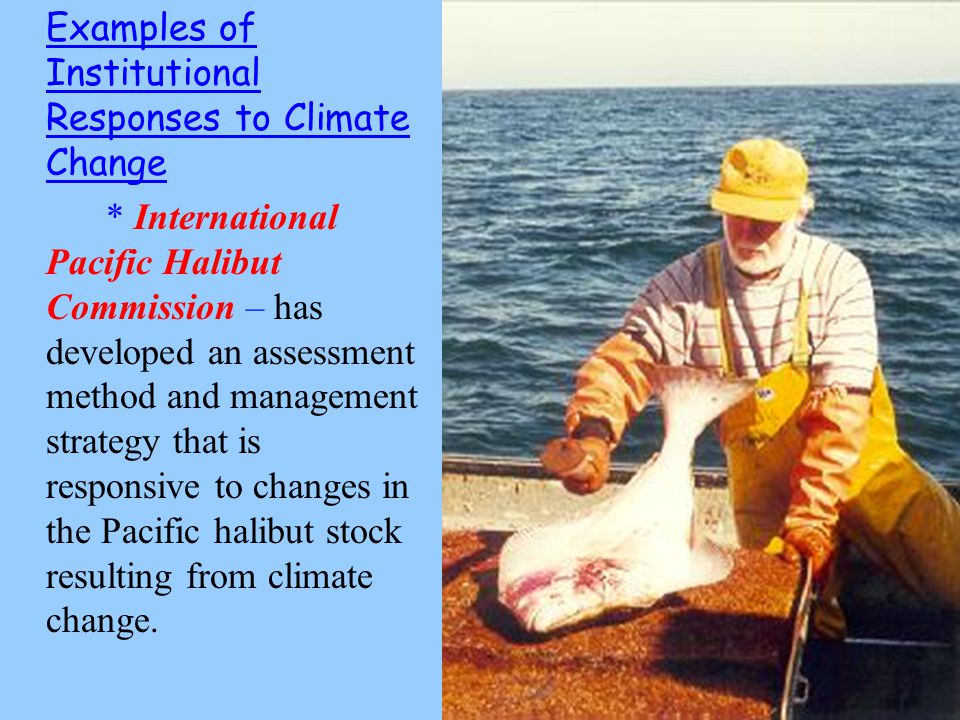 Examples of Institutional Responses to Climate Change * International Pacific Halibut Commission – has developed an assessment method and management strategy that is responsive to changes in the Pacific halibut stock resulting from climate change.