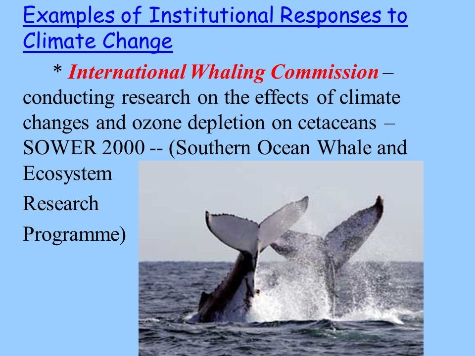 Examples of Institutional Responses to Climate Change * International Whaling Commission – conducting research on the effects of climate changes and ozone depletion on cetaceans – SOWER 2000 -- (Southern Ocean Whale and Ecosystem Research Programme)