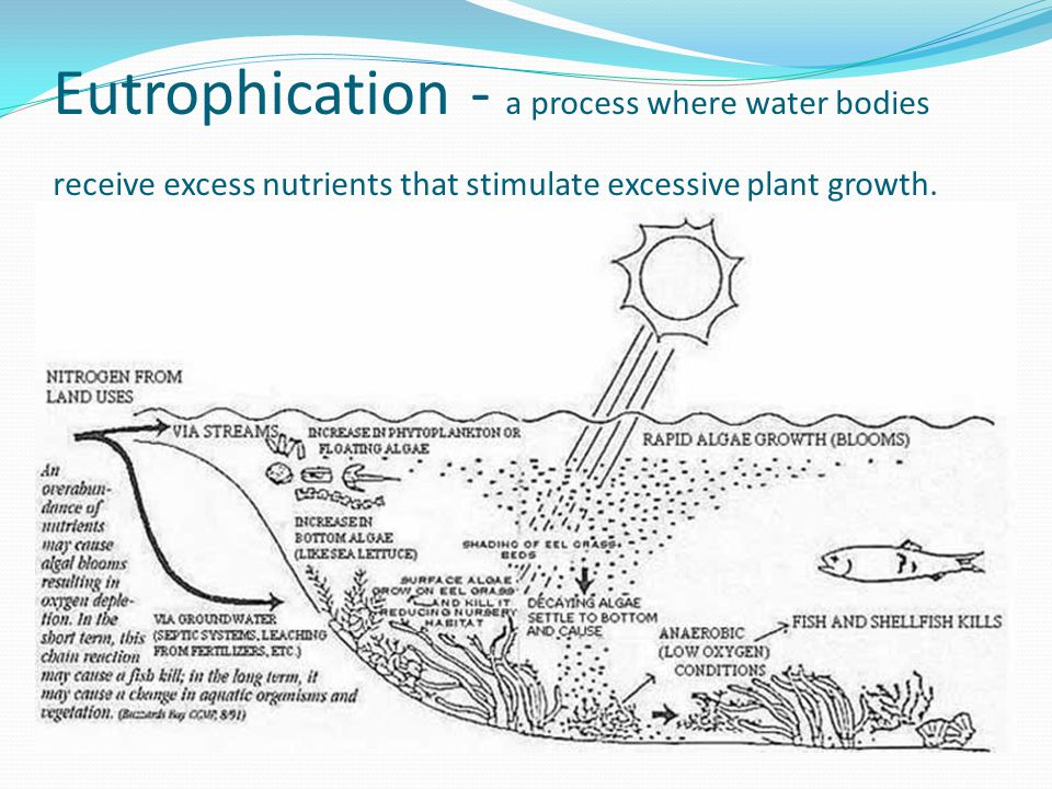 Eutrophication - a process where water bodies receive excess nutrients that stimulate excessive plant growth.