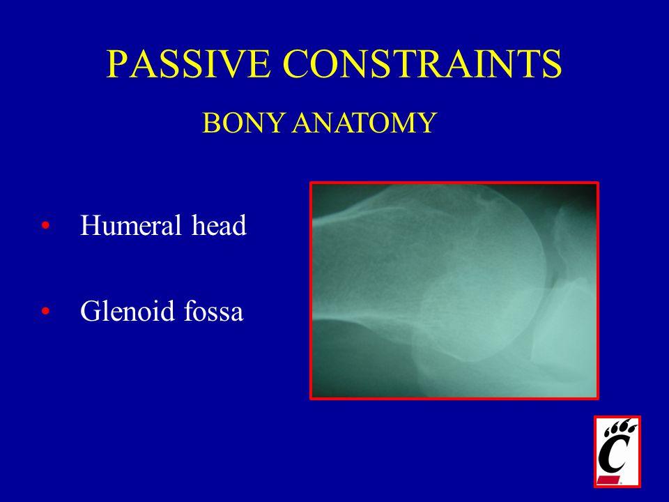 PASSIVE CONSTRAINTS Humeral head Glenoid fossa BONY ANATOMY