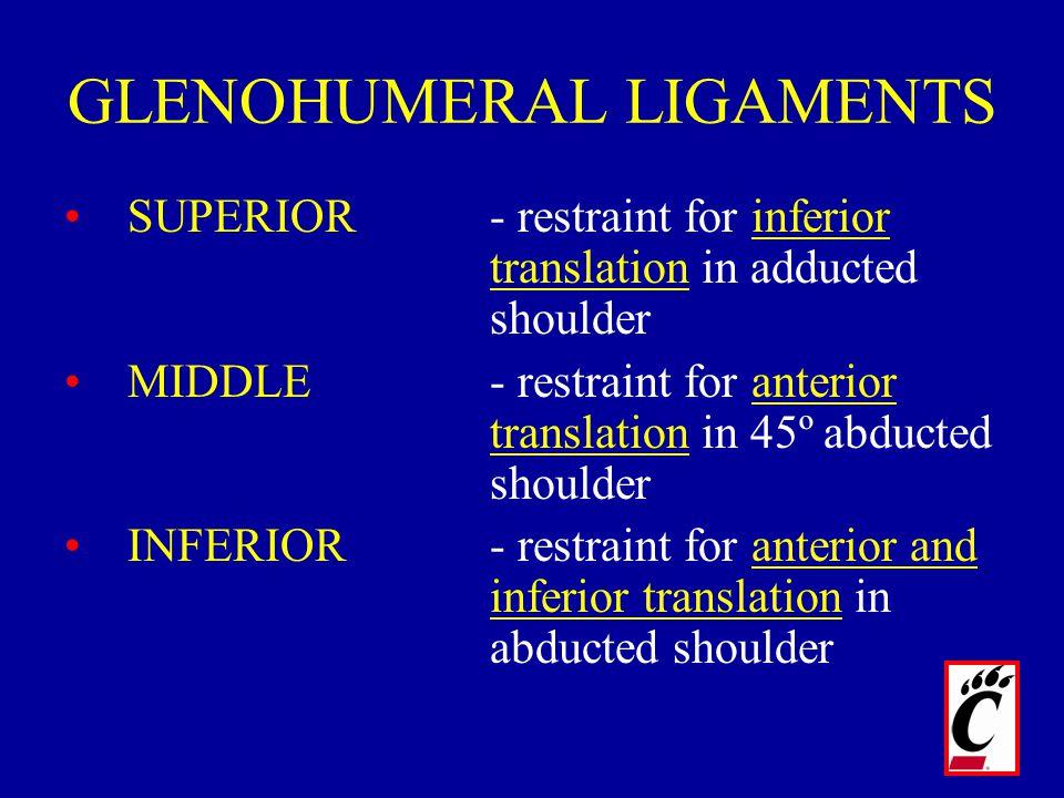GLENOHUMERAL LIGAMENTS SUPERIOR- restraint for inferior translation in adducted shoulder MIDDLE- restraint for anterior translation in 45º abducted sh