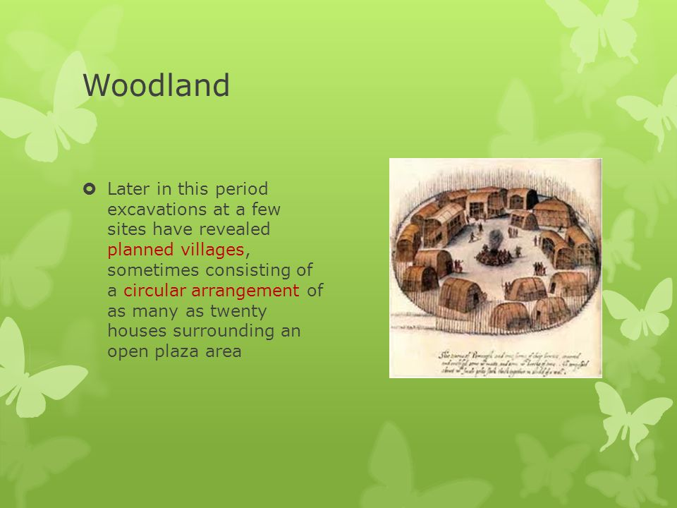 Woodland  domesticated plants, included goosefoot, maygrass, knotweed, and sunflower  Nuts and other wild foods, however, continued to form the bulk of the diet  Corn was introduced  began clearing forests for fields