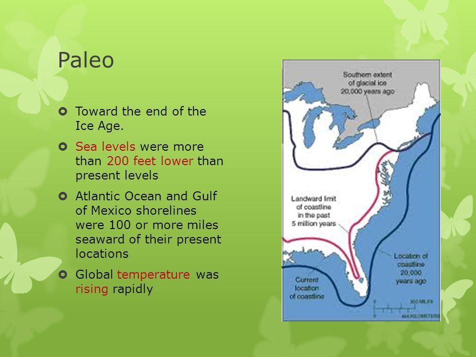 Paleo  great continental ice sheets were retreating, causing the coastline to move rapidly inland  During this interval massive extinctions of such animals as elephants, horses, camels, and other megafauna took place  In north Georgia a spruce/pine boreal forest was replaced by northern hardwoods (oak, hickory, beech, birch, and elm),