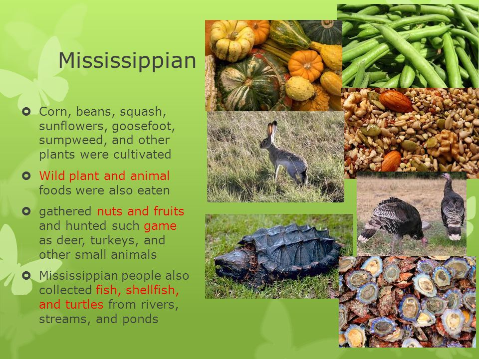 Mississippian  spent much of their lives outdoors  houses were used mainly as shelter from inclement weather, sleeping in cold months, and storage  rectangular or circular pole structures;
