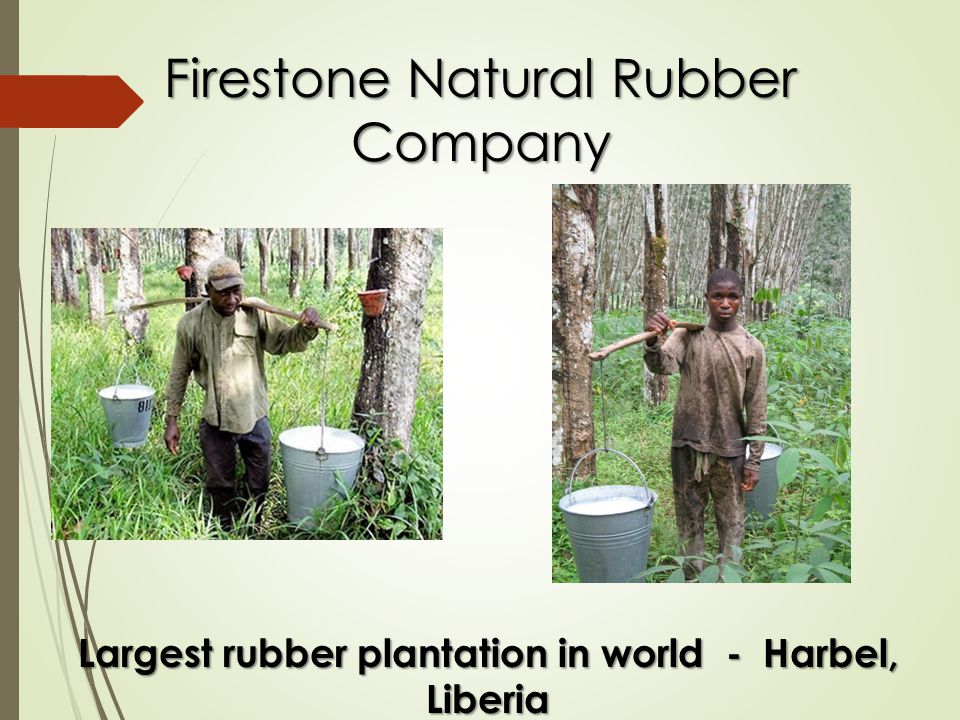 Firestone Natural Rubber Company Largest rubber plantation in world - Harbel, Liberia