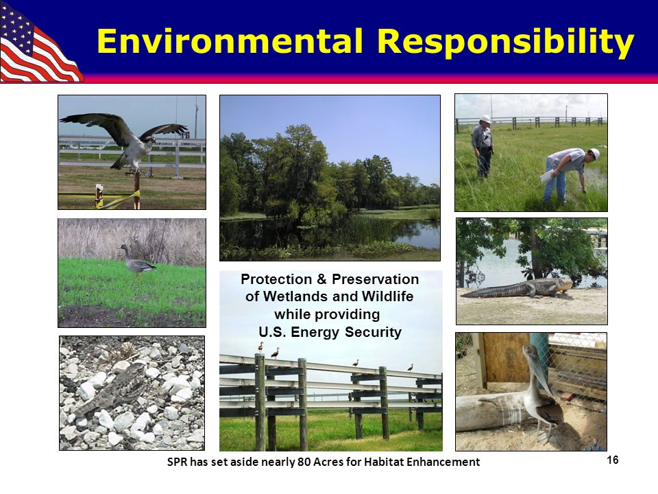 Protection & Preservation of Wetlands and Wildlife while providing U.S. Energy Security SPR has set aside nearly 80 Acres for Habitat Enhancement Envi