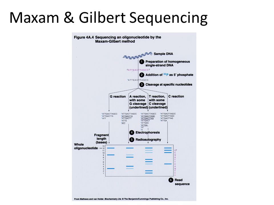 Sequencing genomes using Sanger's method Extract & purify genomic DNA Fragmentation Make a clone library Sequence clones Align sequencies ( -> contigs -> scaffolds) Close the gaps Cost/Mb=1000 $, and it takes TIME