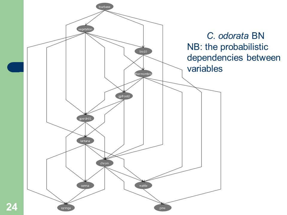 24 C. odorata BN NB: the probabilistic dependencies between variables
