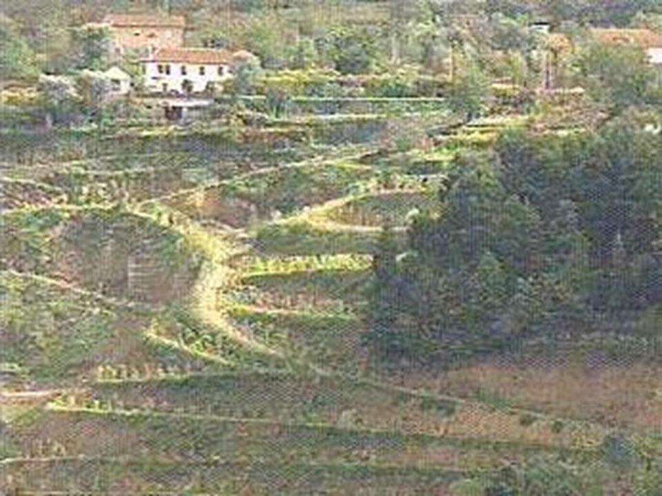 ECDL'2000 - Lisbon, September 2000 © 2000, nmg 12