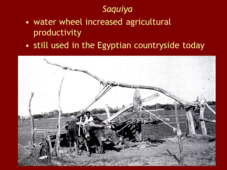 Saquiya water wheel increased agricultural productivity still used in the Egyptian countryside today