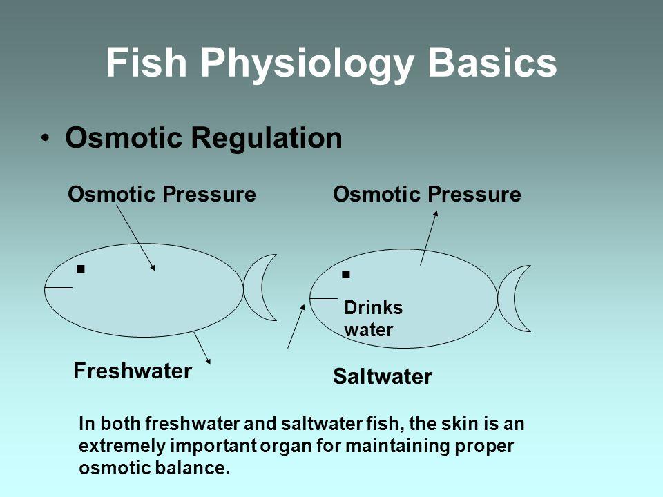 Fish Physiology Basics Osmotic Regulation..