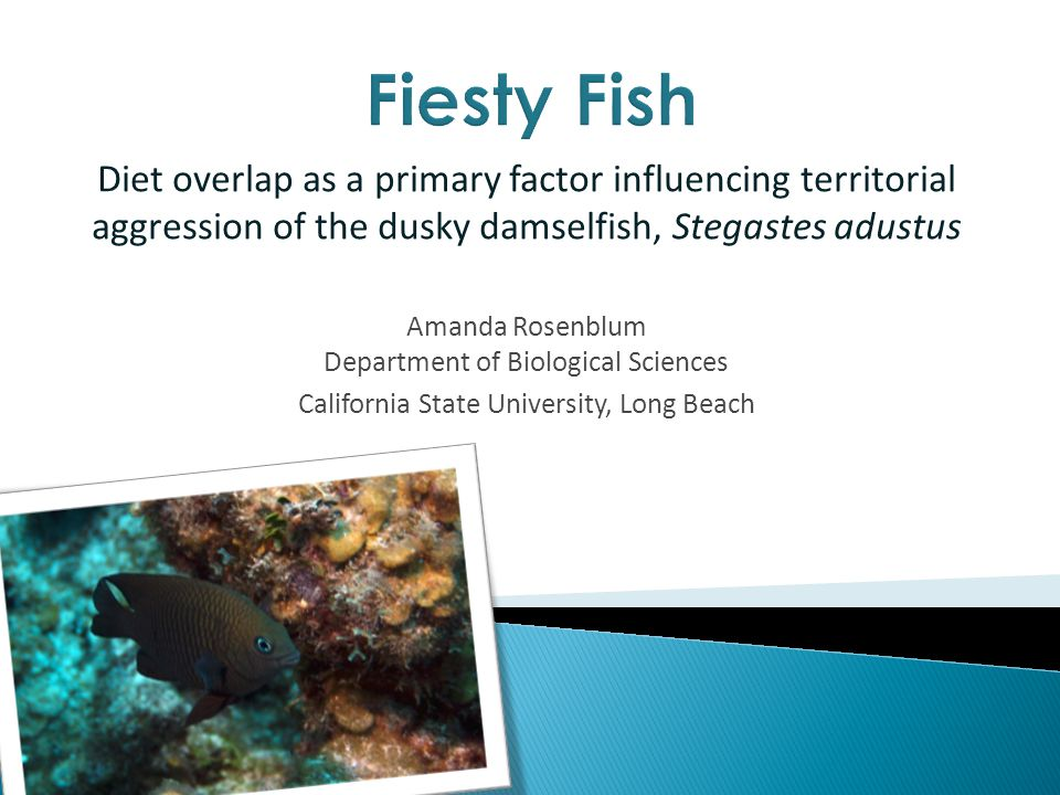 Diet overlap as a primary factor influencing territorial aggression of the dusky damselfish, Stegastes adustus Amanda Rosenblum Department of Biological Sciences California State University, Long Beach