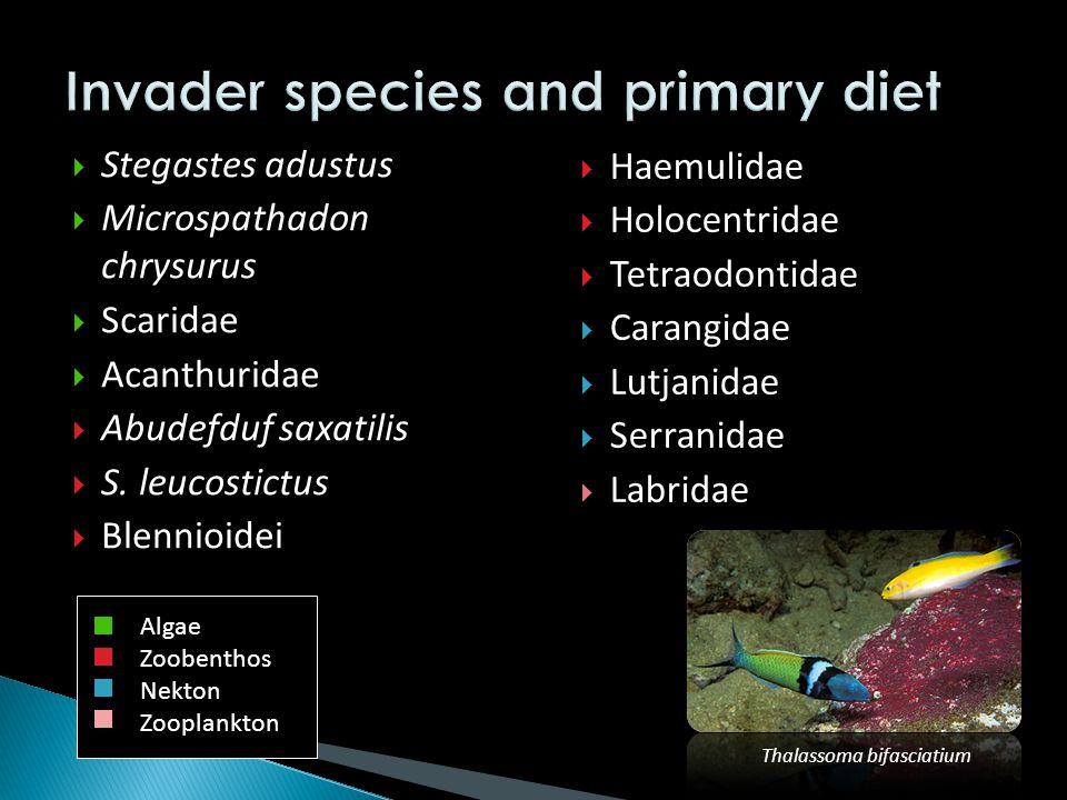  Stegastes adustus  Microspathadon chrysurus  Scaridae  Acanthuridae  Abudefduf saxatilis  S.