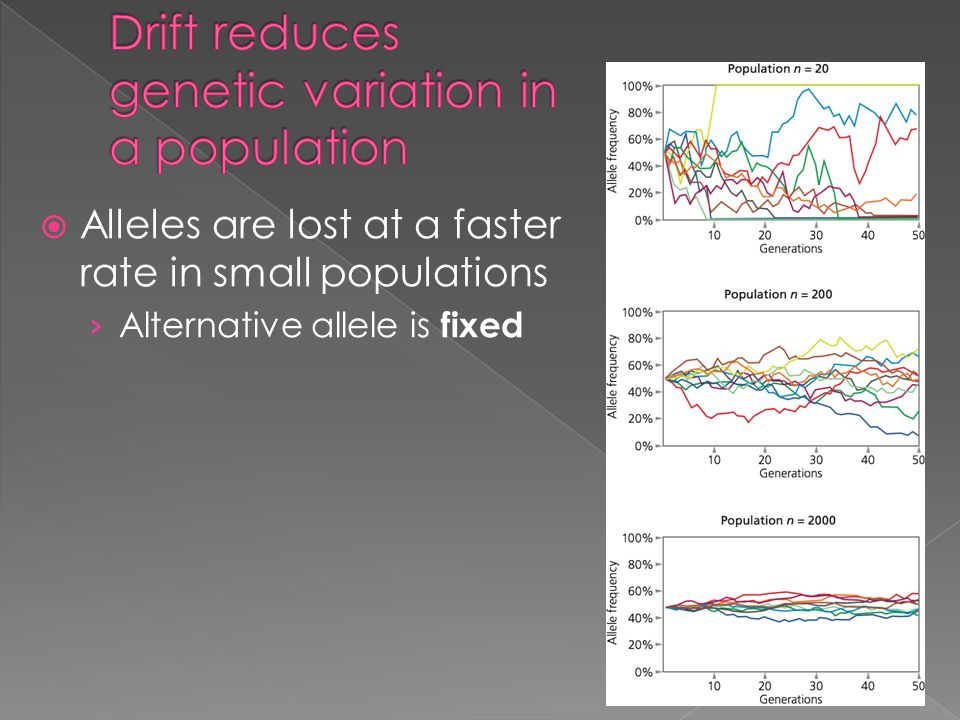  Alleles are lost at a faster rate in small populations › Alternative allele is fixed