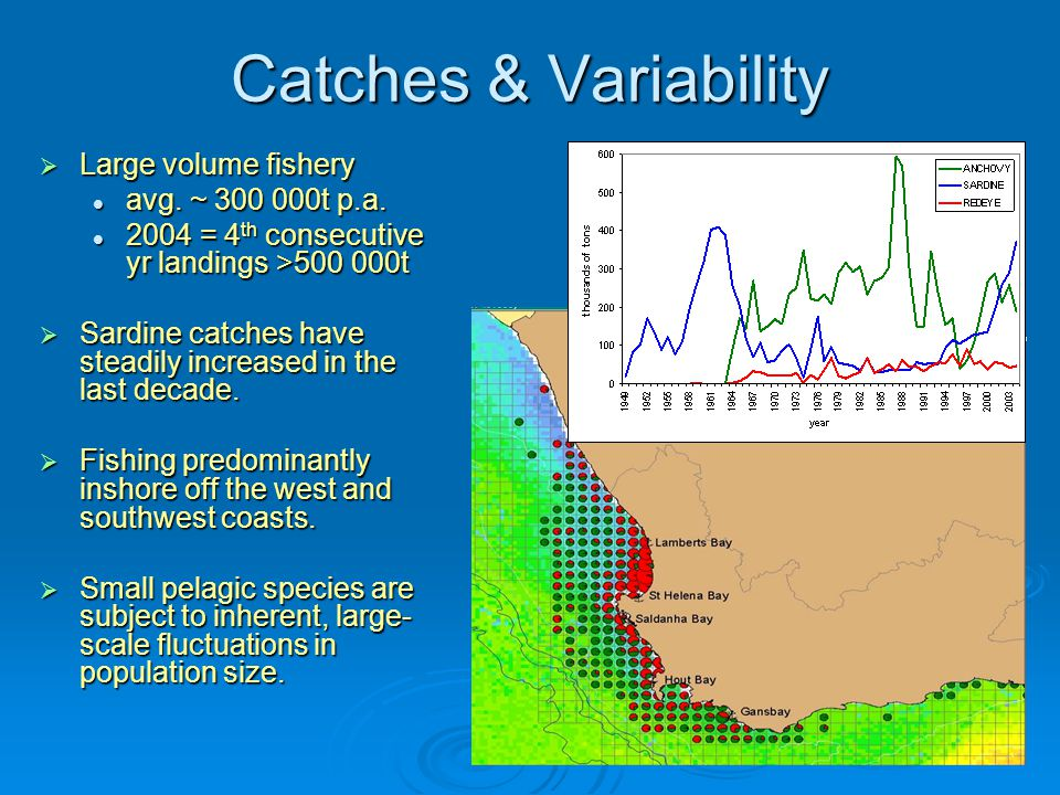 Catches & Variability  Large volume fishery avg. ~ 300 000t p.a.