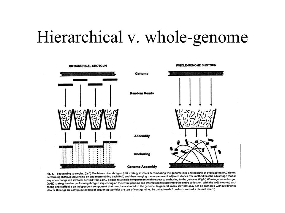 Hierarchical v. whole-genome