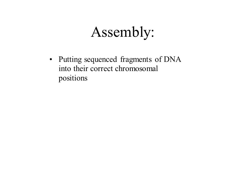 Assembly: Putting sequenced fragments of DNA into their correct chromosomal positions