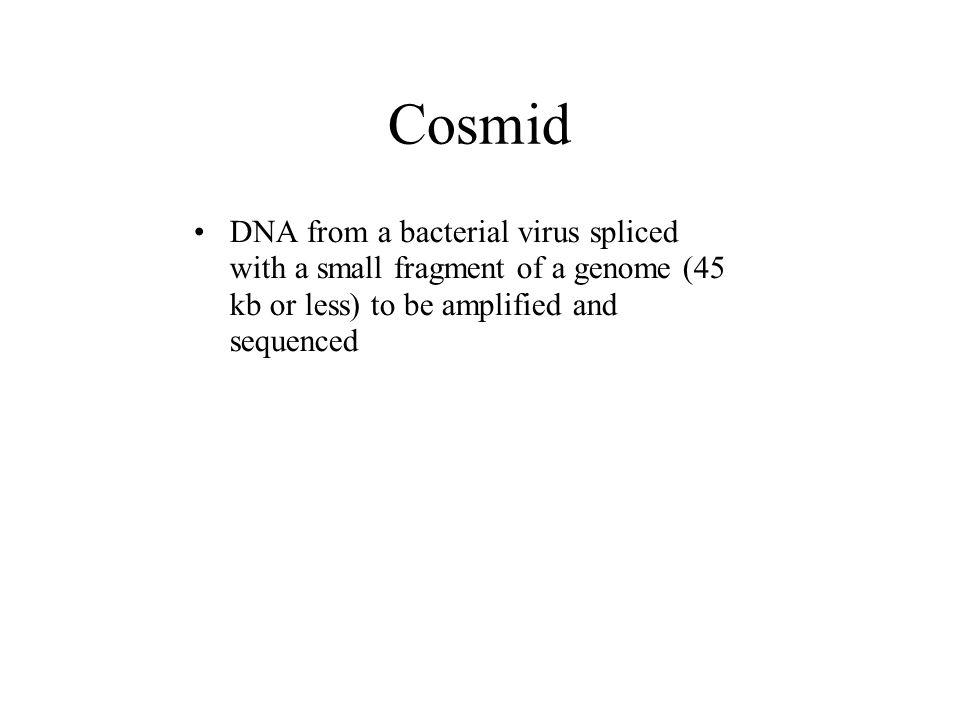 Cosmid DNA from a bacterial virus spliced with a small fragment of a genome (45 kb or less) to be amplified and sequenced