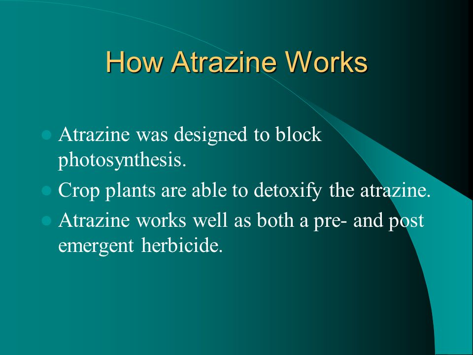 How Atrazine Works Atrazine was designed to block photosynthesis. Crop plants are able to detoxify the atrazine. Atrazine works well as both a pre- an
