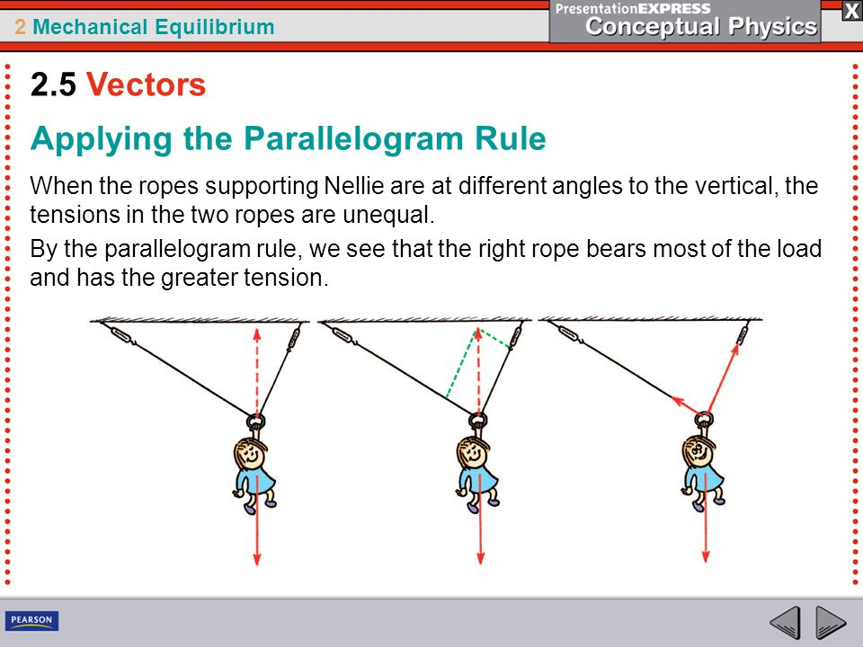 2 Mechanical Equilibrium When the ropes supporting Nellie are at different angles to the vertical, the tensions in the two ropes are unequal. By the p
