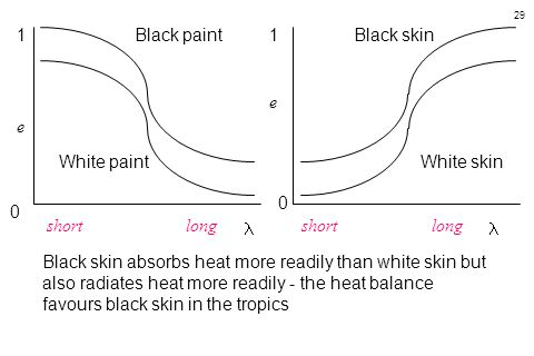 29 0 1 e 0 1 e Black paint White paint Black skin White skin Black skin absorbs heat more readily than white skin but also radiates heat more readily