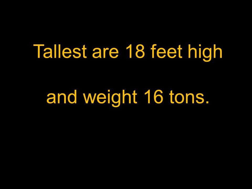 Tallest are 18 feet high and weight 16 tons.