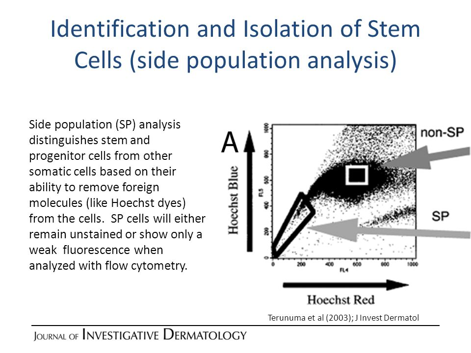 Identification and Isolation of Stem Cells (mitochodrial membrane potential) By adding a potentiometric dye (like TMRM-555) to a mixture of cells followed by FACS analysis, stem cells can be separated by their higher mitochondrial membrane potential (MMP) compared to more differentiated cells.