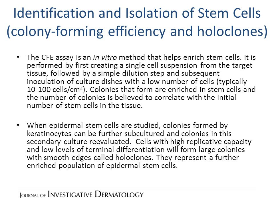 Identification and Isolation of Stem Cells (functional assays) The ultimate test for stemness is the ability of sorted/enriched cells to maintain tissue homeostasis indefinitely.