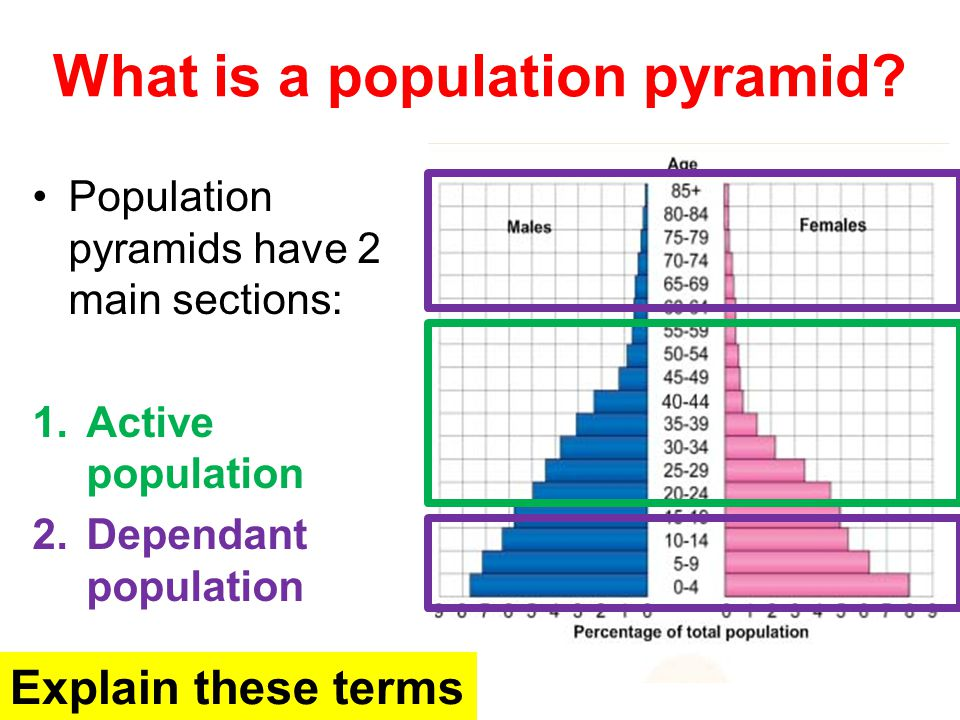 What is a population pyramid? Population pyramids have 2 main sections: 1.Active population 2.Dependant population Explain these terms