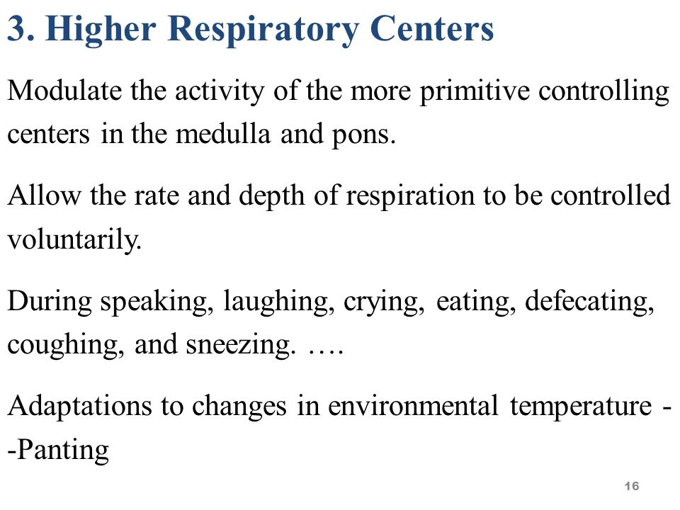 Respiratory Center We will discuss the following groups of neurons in the respiratory center.