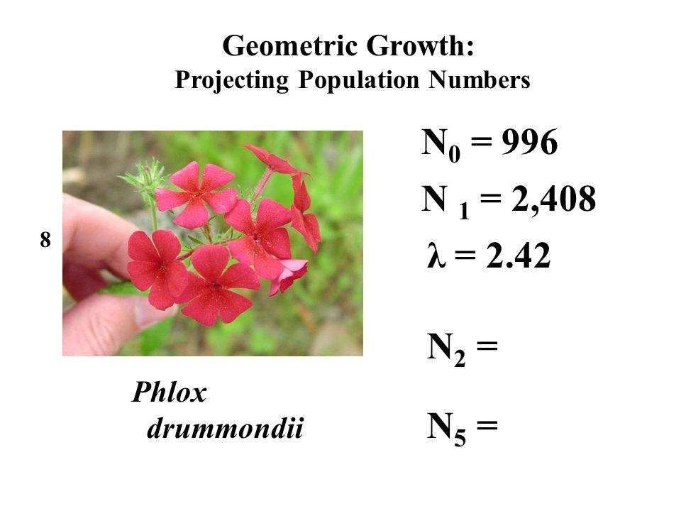 Geometric Growth: Projecting Population Numbers N 0 = 996 Phlox drummondii 8 λ = 2.42 N 2 = N 1 = 2,408 N 5 =