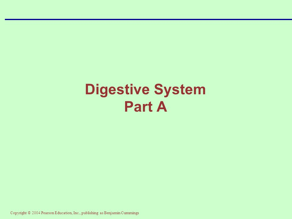 Copyright © 2004 Pearson Education, Inc., publishing as Benjamin Cummings Digestive System Part B