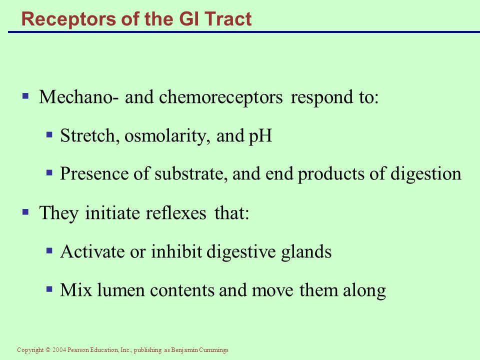 Copyright © 2004 Pearson Education, Inc., publishing as Benjamin Cummings Receptors of the GI Tract  Mechano- and chemoreceptors respond to:  Stretc