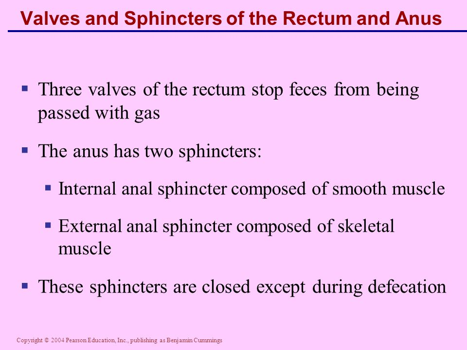 Copyright © 2004 Pearson Education, Inc., publishing as Benjamin Cummings Valves and Sphincters of the Rectum and Anus  Three valves of the rectum st