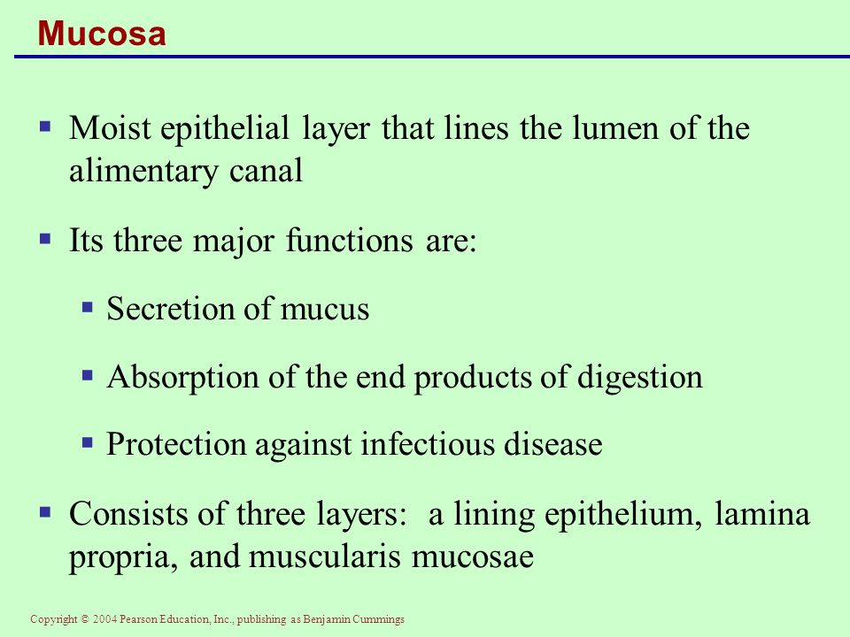 Copyright © 2004 Pearson Education, Inc., publishing as Benjamin Cummings Mucosa  Moist epithelial layer that lines the lumen of the alimentary canal