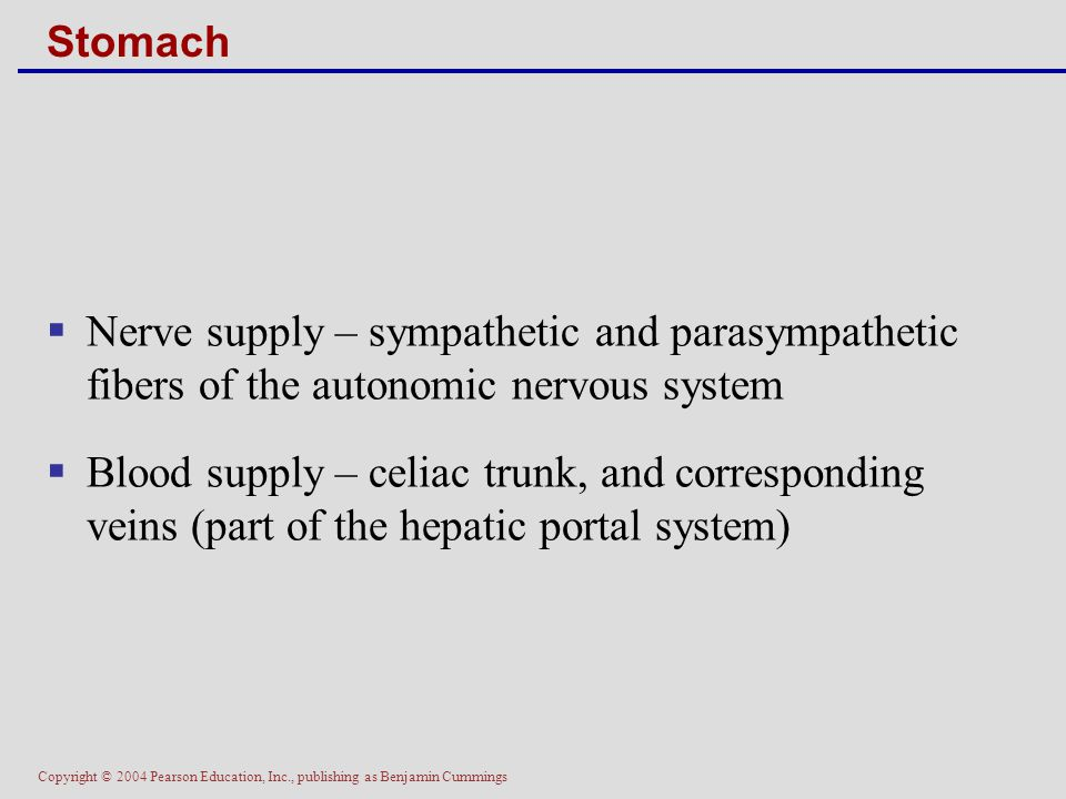 Copyright © 2004 Pearson Education, Inc., publishing as Benjamin Cummings Stomach  Nerve supply – sympathetic and parasympathetic fibers of the auton