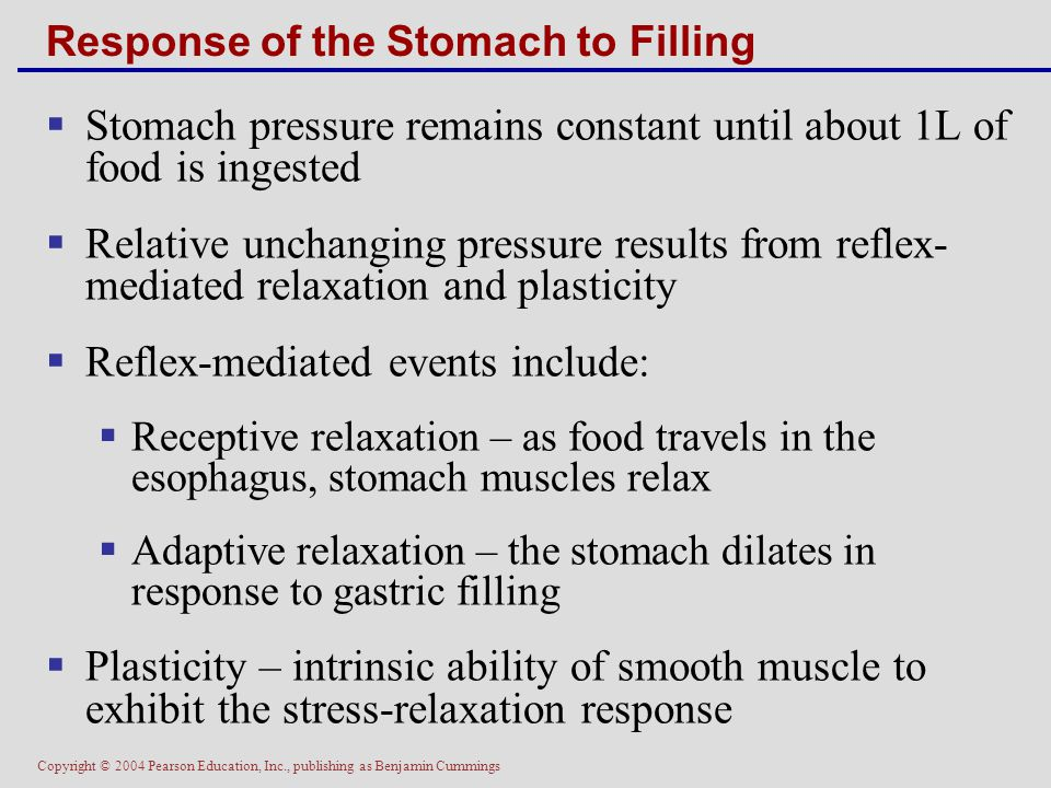 Copyright © 2004 Pearson Education, Inc., publishing as Benjamin Cummings Response of the Stomach to Filling  Stomach pressure remains constant until
