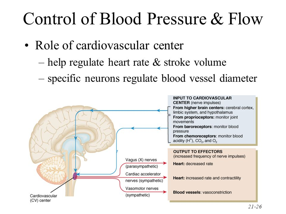 21-26 Control of Blood Pressure & Flow Role of cardiovascular center –help regulate heart rate & stroke volume –specific neurons regulate blood vessel