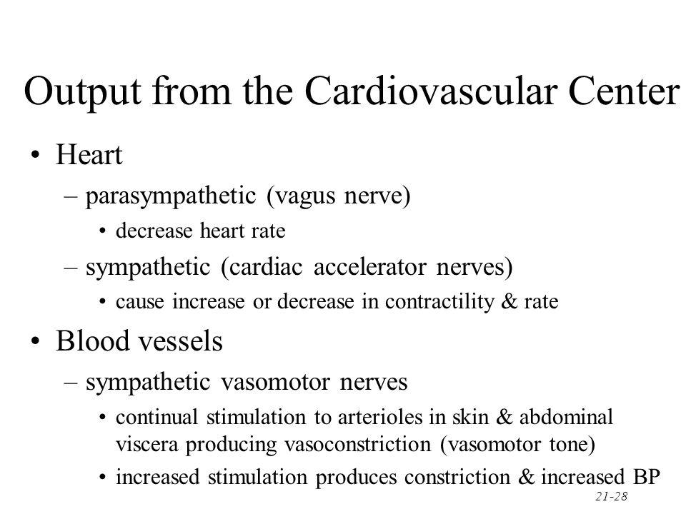 21-28 Output from the Cardiovascular Center Heart –parasympathetic (vagus nerve) decrease heart rate –sympathetic (cardiac accelerator nerves) cause i