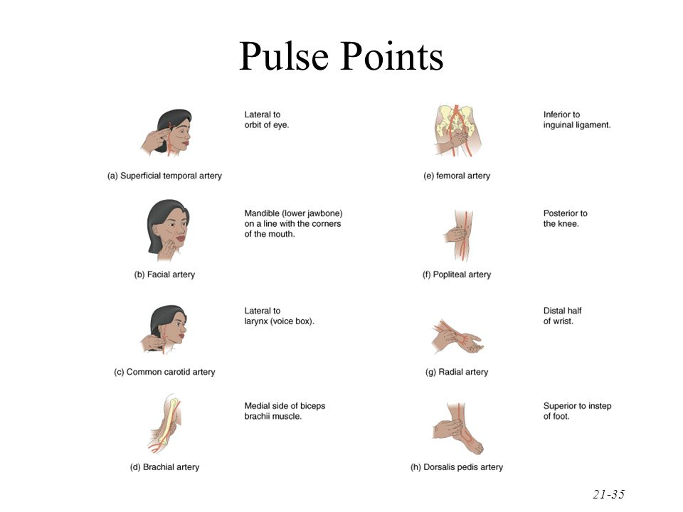 21-35 Pulse Points