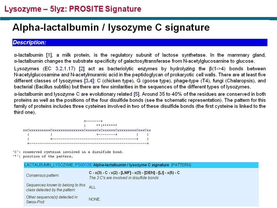 PROMOTIF Secondary Structure Analysis – 5lyz....