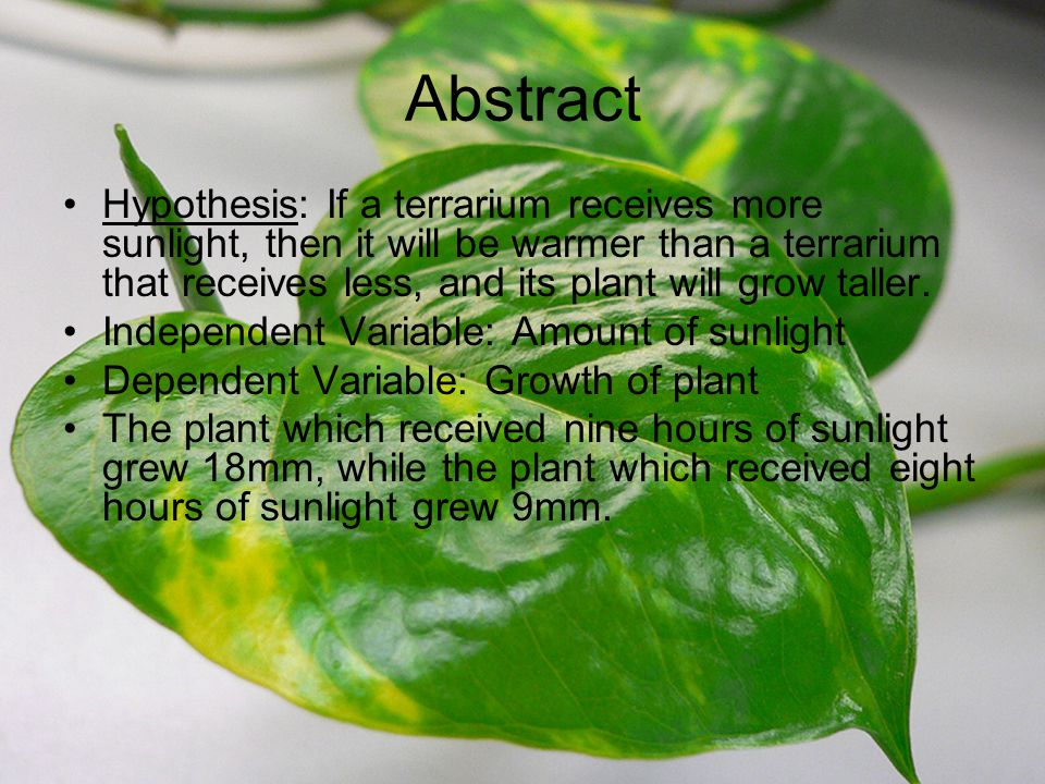 Effects of Varying Amounts of Sunlight on Plant Growth in Terraria Nathaniel Routh Hour 2 http://upload.wikimedia.org/wikipedia/commons/4/4f/Epipremnum_pinnatum_var.jpg