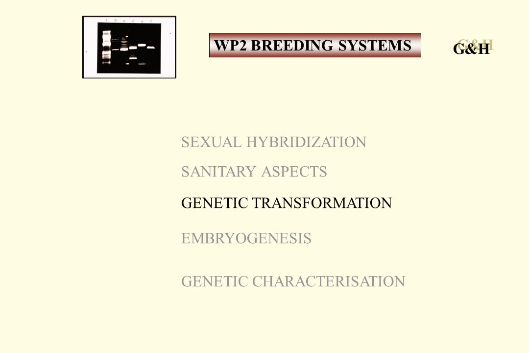 SEXUAL HYBRIDIZATION SANITARY ASPECTS GENETIC TRANSFORMATION EMBRYOGENESIS GENETIC CHARACTERISATION G&H WP2 BREEDING SYSTEMS