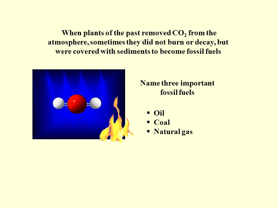 Name three important fossil fuels  Oil  Coal  Natural gas When plants of the past removed CO 2 from the atmosphere, sometimes they did not burn or