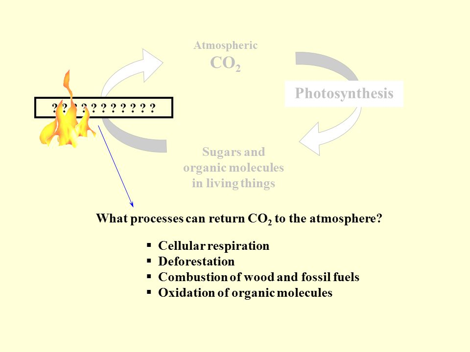 Atmospheric CO 2 Sugars and organic molecules in living things Photosynthesis .