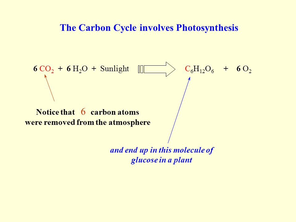 6 CO 2 + 6 H 2 O + SunlightC 6 H 12 O 6 + 6 O 2 Notice that 6 carbon atoms were removed from the atmosphere The Carbon Cycle involves Photosynthesis and end up in this molecule of glucose in a plant
