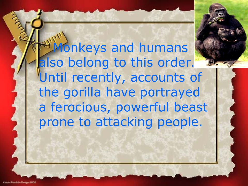 Monkeys and humans also belong to this order. Until recently, accounts of the gorilla have portrayed a ferocious, powerful beast prone to attacking pe