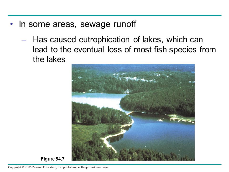 Copyright © 2005 Pearson Education, Inc. publishing as Benjamin Cummings In some areas, sewage runoff – Has caused eutrophication of lakes, which can