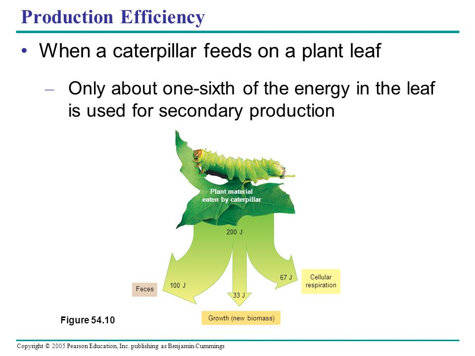 Copyright © 2005 Pearson Education, Inc. publishing as Benjamin Cummings Production Efficiency When a caterpillar feeds on a plant leaf – Only about o