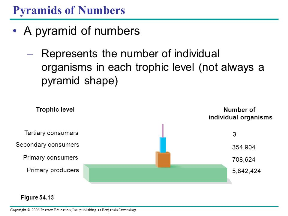 Copyright © 2005 Pearson Education, Inc. publishing as Benjamin Cummings Pyramids of Numbers A pyramid of numbers – Represents the number of individua